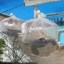 ถุงพลาสติกขนาดใหญ่ 80x100 (กว้าง 2เมตร ยาว 2.5เมตร) thumbnail 4